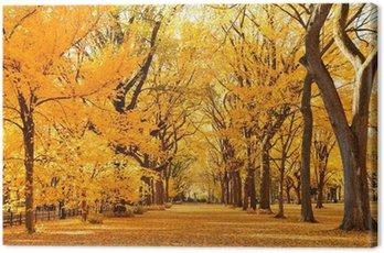 Obraz na Płótnie Central Park Jesień