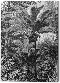 Obraz na Płótnie Chamaerops - Palma karłowata