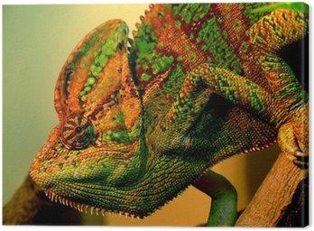 Obraz na Płótnie Chameleo z moskiewskim zoo
