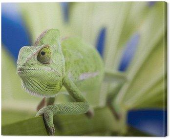 Obraz na Płótnie Chameleon na liściu