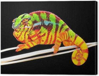 Obraz na Płótnie Chameleon pardalis