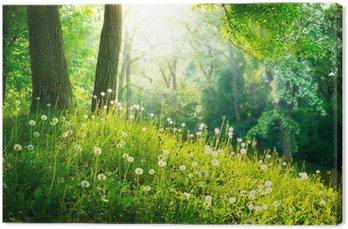 Obraz na Płótnie Charakter wiosny. piękny krajobraz. zielona trawa i drzew