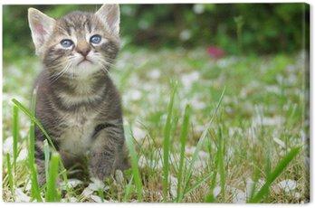 Chaton dans l'herbe Tigre