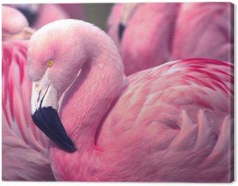Obraz na Płótnie Chilijska Pink Flamingo