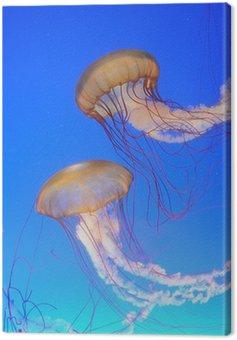 Obraz na Płótnie Chrysaora fuscescens meduzy na niebiesko wody
