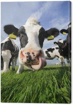 Obraz na Płótnie Ciekawskich krów