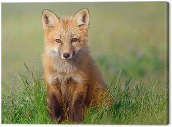 Obraz na Płótnie Ciekawy zestaw Fox
