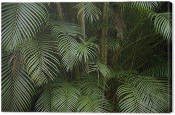 Obraz na Płótnie Ciemny tropikalnej dżungli liść palmy w tle