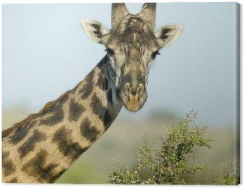 Obraz na Płótnie Close-up portret żyrafa, Park Narodowy Serengeti, Serengeti
