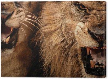 Obraz na Płótnie Close-up strzał z dwóch lew ryczący
