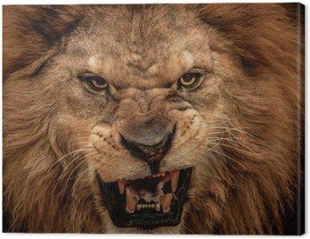 Obraz na Płótnie Close-up strzał z lew ryczący