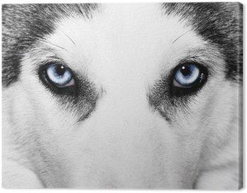 Close-up strzał z pies husky