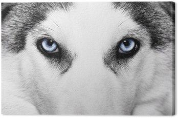 Obraz na Płótnie Close-up strzał z pies husky