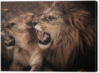 Obraz na Płótnie Close-up strzał z ryczący lew i lwica