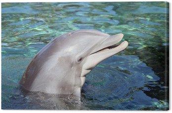 Obraz na Płótnie Close-up z butelki węszył delfinów uśmiecha