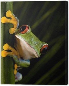 Obraz na Płótnie Crazy frog
