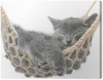 Obraz na Płótnie Cute kitten szary leżącego w hamaku