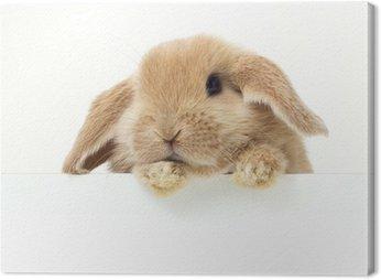 Cute królik. Close-up portret na białym tle