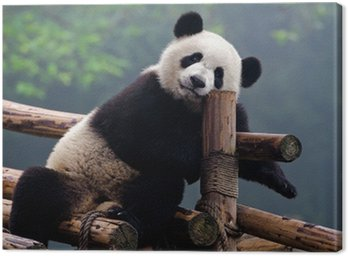 Obraz na Płótnie Cute panda bear