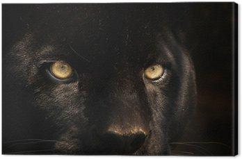 Obraz na Płótnie Czarna pantera