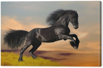 Obraz na Płótnie Czarne konie fryzyjskie galopuje w zachodzie słońca