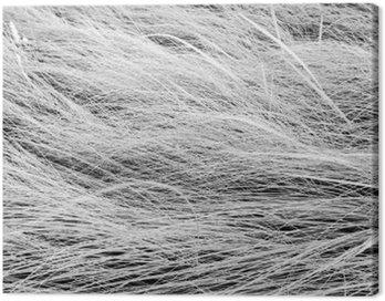 Obraz na Płótnie Czarno-białe zdjęcie, zamknąć długie trawy pola tekstury backgrou