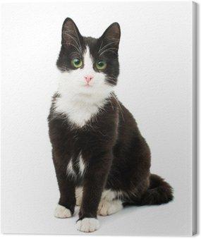 Obraz na Płótnie Czarno-biały kot