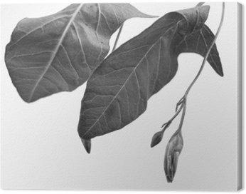 Obraz na Płótnie Czarno-biały macrophoto obiektu roślinnego z głębi pola