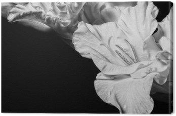 Obraz na Płótnie Czarno-biały mieczyk