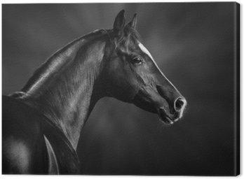 Obraz na Płótnie Czarno-biały portret arabskiego ogiera