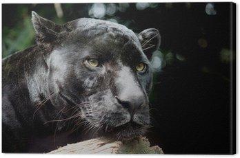 Obraz na Płótnie Czarny Jaguar