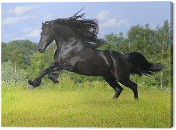 Obraz na Płótnie Czarny koń fryzyjski grać na łące