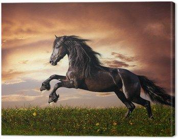 Czarny koń galop fryzyjski