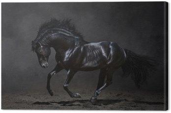 Obraz na Płótnie Czarny koń galopujący na ciemnym tle