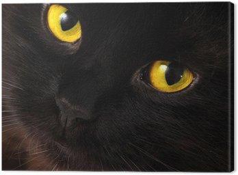 Obraz na Płótnie Czarny kot patrzy na ciebie z jasne żółte oczy