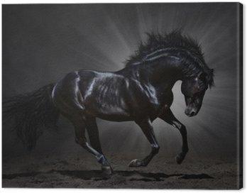 Obraz na Płótnie Czarny ogier andaluzyjski galopuje