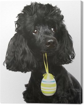 Czarny pudel z jajka wielkanocne w zębach