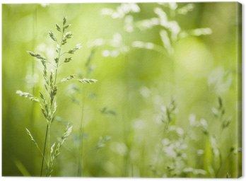 Obraz na Płótnie Czerwiec kwitnąca trawa zielona