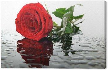 Obraz na Płótnie Czerwona róża na szkle z kropelek wody