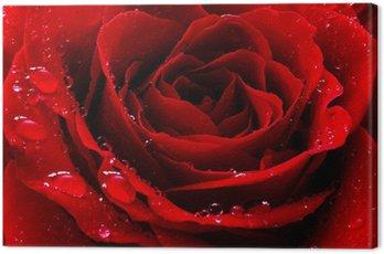 Obraz na Płótnie Czerwona róża z kropli wody