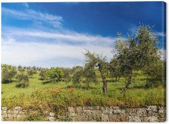 Obraz na Płótnie Czerwone kwiaty i drzewa oliwnego na wiosnę