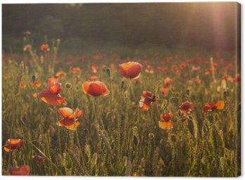 Obraz na Płótnie Czerwone kwiaty maku