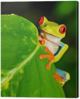 Obraz na Płótnie Czerwone oczy zielone drzewo lub krzykliwe żaba liść, kostaryka