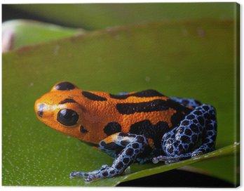 Obraz na Płótnie Czerwone paski, dart nogi trucizna Blue Frog