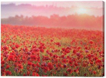 Obraz na Płótnie Czerwone pole maku w porannej mgle