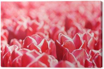 Obraz na Płótnie Czerwone tulipany