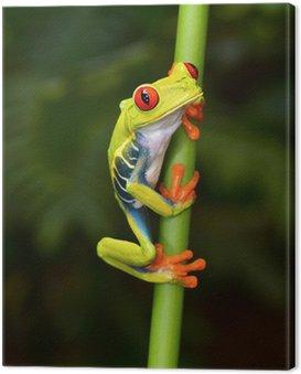 Obraz na Płótnie Czerwony eyed drzewa żaba na oddział, Cahuita, Kostaryka