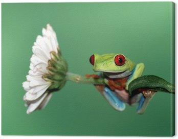 Obraz na Płótnie Czerwony eyed drzewa żaba