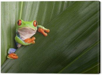 Czerwony eyed drzewa żaba