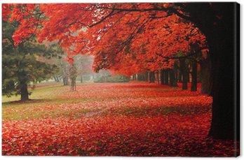 Czerwony jesienią w parku